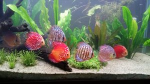 Best Fish Tanks For Beginners