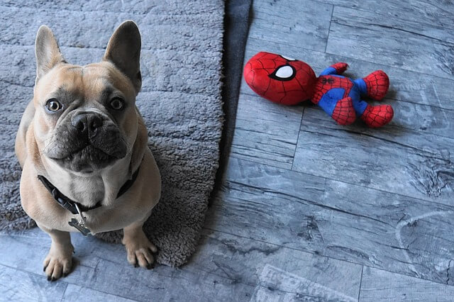 Best dog food for french bulldogs in the wold